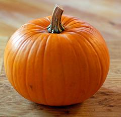 Pumpkin by Elana Amsterdam